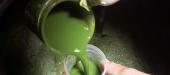 Algae, for healthy foods